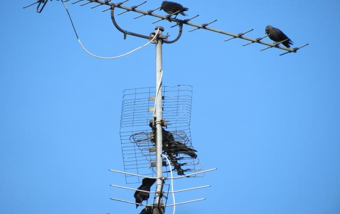 aumentar señal antena parabólica comunitaria